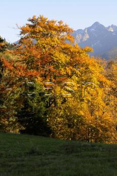 Vysoke tatry jeseň počasie stromy tatranska javorina babie leto
